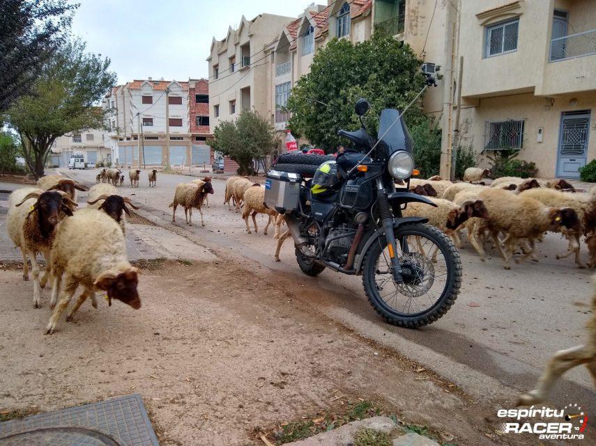 15 dias por Marruecos con Royal Enfield Himalayan 82